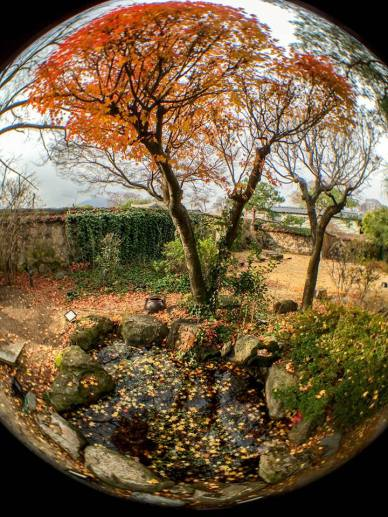 "PM's comment: ""A lovely garden of a traditional Korean house. Even in December, a few maples still retain their autumn leaves"""