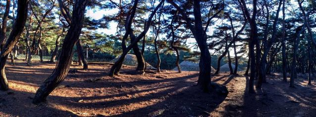 "PM's caption: ""The Three Royal Tombs on Namsan Mountain. It is a very tranquil spot, popular with photographers."""