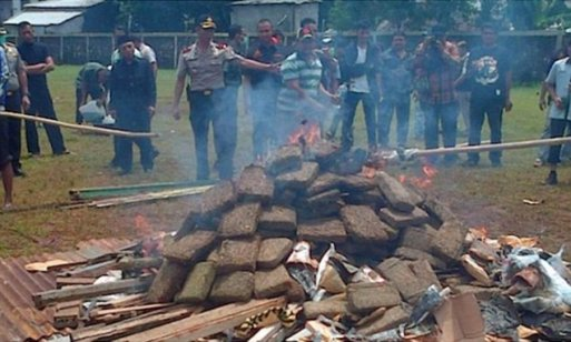 Indonesian police destroying huge stash of marijuana