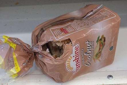 Photo taken by Mr Sun of a loaf of bread gnawed by rats in NTUC FairPrice supermarket